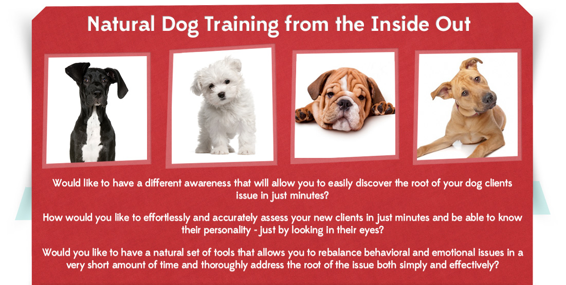 In Sync Holistic Dog Trainer Certification