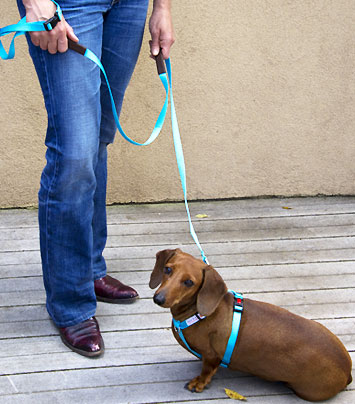 Get-A-Grip - World's Most Comfortable Dog Leash